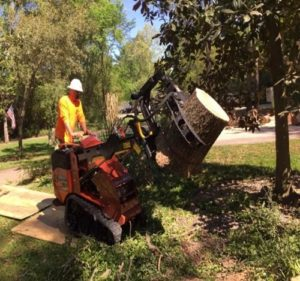 conroe stump and tree removal