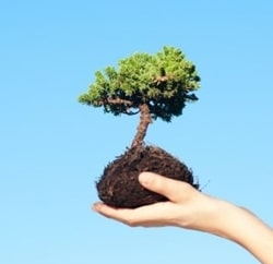 conroe tree care features