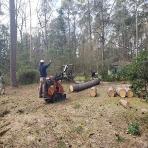 conroe tx tree removal
