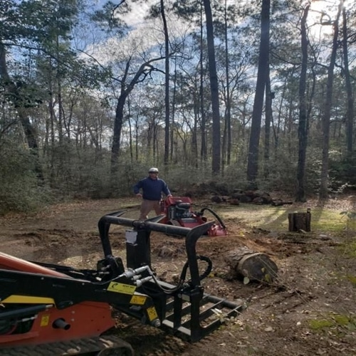 conroe tx tree root removal