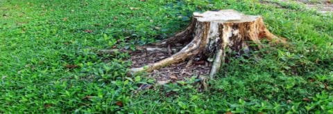Do You Have A Tree Stump In Your Yard You Want Removed?