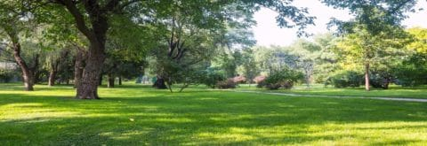 Are Your Trees Becoming To Overgrown?